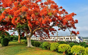 Picture trees, train, flowering