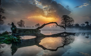 Wallpaper sunset, fog, lake, tree