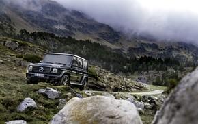 Picture stones, black, vegetation, Mercedes-Benz, SUV, 2018, G-Class