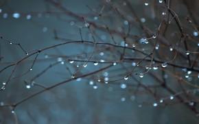 Wallpaper autumn, drops, branches