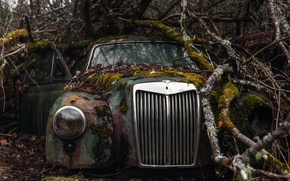 Picture machine, branches, moss, scrap