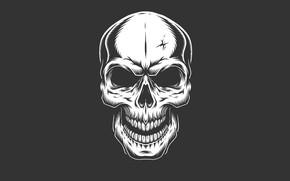 Picture skull, minimalism, head, skeleton, sake