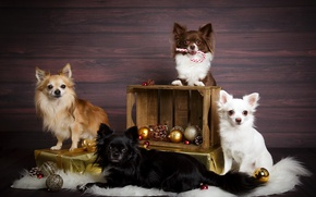 Picture dogs, holiday, toys