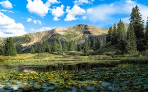 Picture trees, landscape, mountains, lake