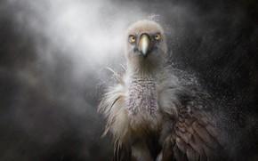 Picture rain, feathers, beak, chick