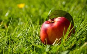Picture grass, the fruit, nectarine