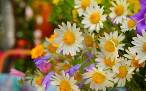 Picture Spring, Chamomile, Flowers