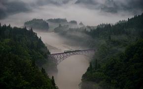 Picture forest, trees, bridge, fog, river, train, cars, haze, forest