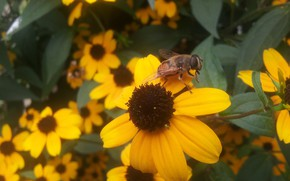 Picture Flower, Bee, Leaves, Orange, A lot