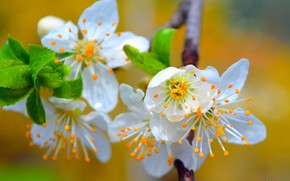Picture Spring, Spring, Flowering, Flowering