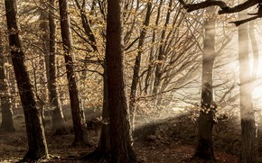 Picture light, trees, nature