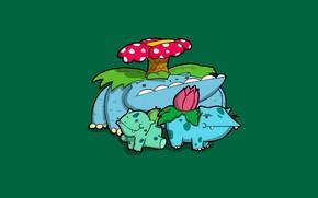 Picture flower, blue, green, green, grass, caricature, flower, blue, pokemon, pokemon, bulbasaur, poisonous, Ivysaur, Venusaur, bulbasaur, …