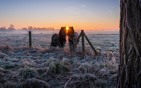 Wallpaper winter, frost, field, grass, the sun, rays, landscape, nature, fog, tree, dawn, horses, morning, village, ...