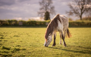 Picture field, summer, the sky, grass, clouds, light, trees, nature, mood, horse, glade, horse, horses, horse, …