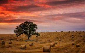 Picture field, tree, glow, straw