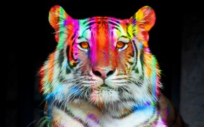 Picture face, tiger, color