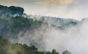 Picture forest, the sky, trees, landscape, fog, foliage, morning, green