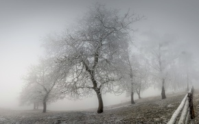 Picture winter, frost, fog