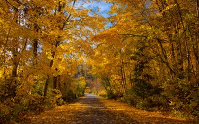 Picture road, autumn, forest, leaves, the sun, trees, Park, yellow, Canada, British Columbia, alley, Kokanee Creek …