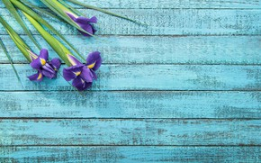 Picture flowers, spring, irises, wooden background