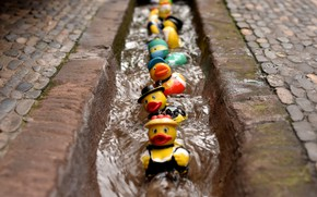 Picture colours, rubber duck race, bunt