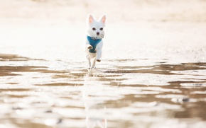 Picture background, dog, running