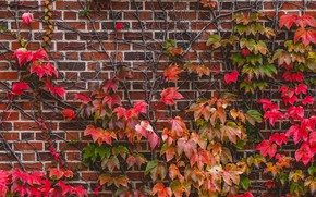 Picture leaves, wall, plant