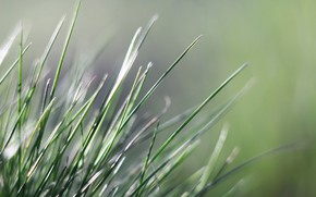 Picture background, spring, grass