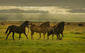 Picture horse, mane, tail, color