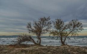 Picture sea, trees, landscape, clouds, shore