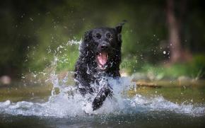 Picture water, joy, squirt, dog, German shepherd