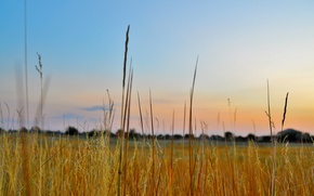 Picture the sky, grass, macro, sunset, the evening