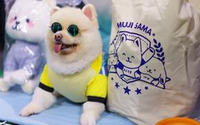Picture language, dog, glasses