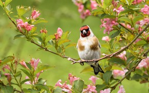 Picture flowers, nature, tree, bird