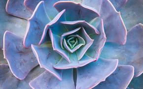 Picture background, plant, petals