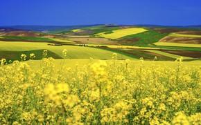 Picture nature, field, dal