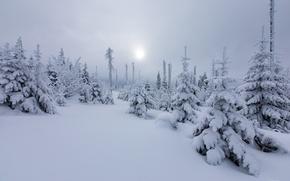 Wallpaper winter, forest, the sun, snow, nature, tree, haze