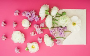 Picture flowers, petals, pink, white, white, pink, flowers, composition, petals, floral