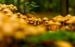 Picture mushrooms, forest, nature