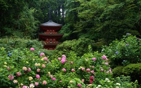 Picture temple, pagoda, the bushes, hydrangea