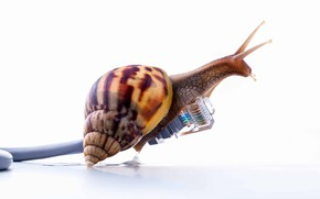Picture internet, speed, snail
