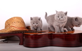 Picture guitar, hat, kittens, the British