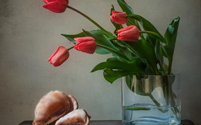 Picture flowers, sink, shell, tulips, vase, still life