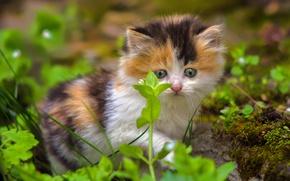 Wallpaper kitty, baby, grass, look