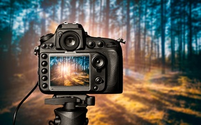 Wallpaper Camera, light, forest