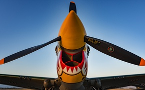 Wallpaper fighter, the airfield, P-40 Warhawk