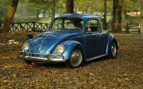 Picture car, Volkswagen, vintage, blue