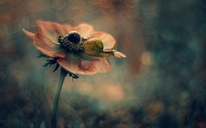 Picture flower, macro, background, snail, anemone