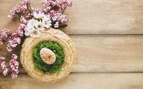 Picture Flowers, Spring, Egg, Easter, Hay, Socket