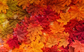 Wallpaper autumn, leaves, background, tree, colorful, wood, background, autumn, leaves, autumn, maple